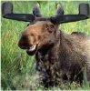 mooseears!.jpg